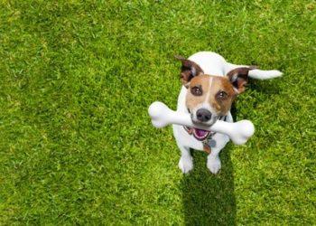 hundefutter-getreidefrei-test