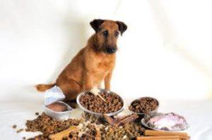 Gutes-Hundefutter-ohne-Getreide-kaufen